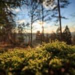 Wald Jagen Jagdschule